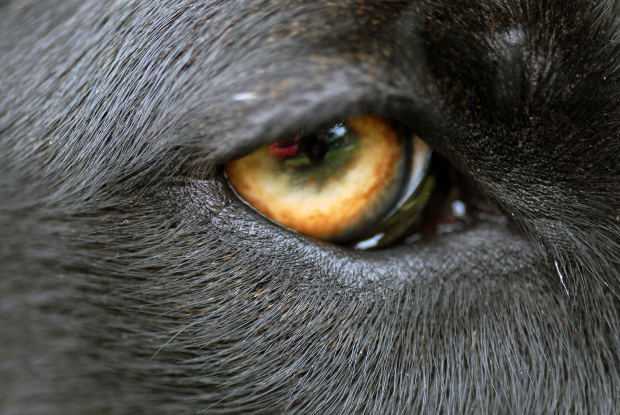 In The Eyes Of The Girl On Fire In The Eyes Of The Wolf